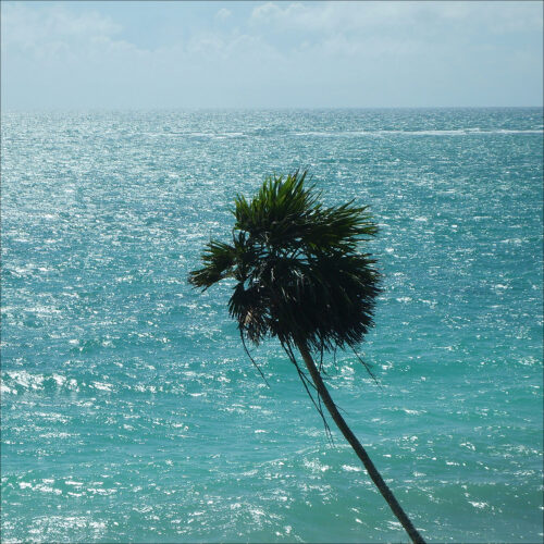 Palm vid havet