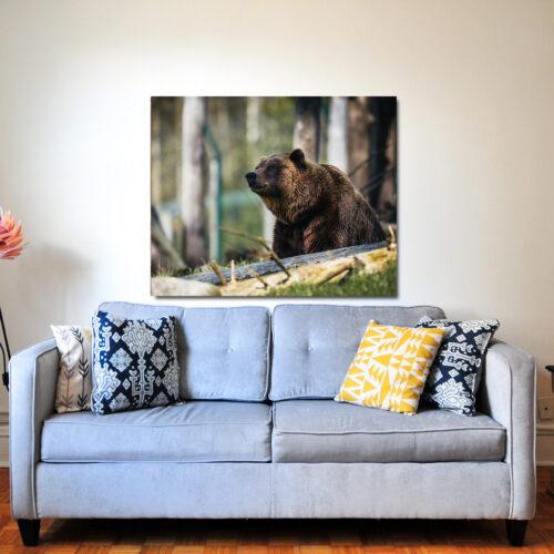 Björn i hemmiljö